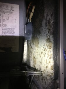Mold in Air Handler